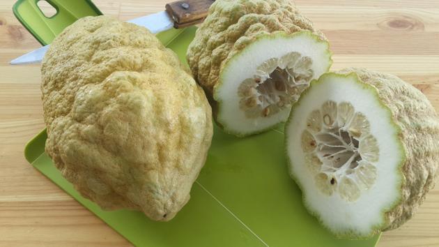 Citron - an original but uncommon citrus fruit !-article for the hindu-metroplus edition