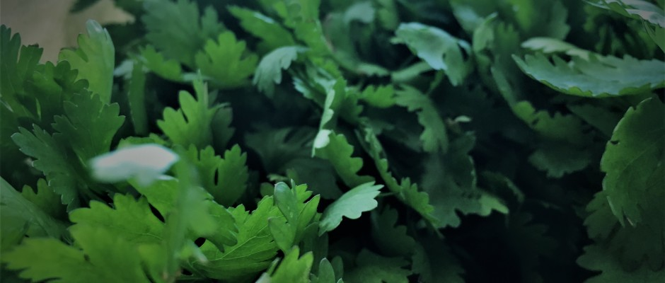 Coriander in your diet