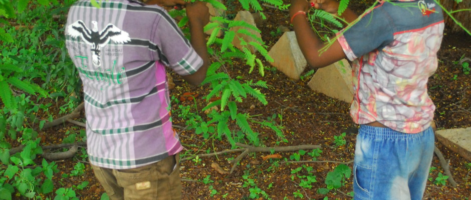 Tender tamarind leaves
