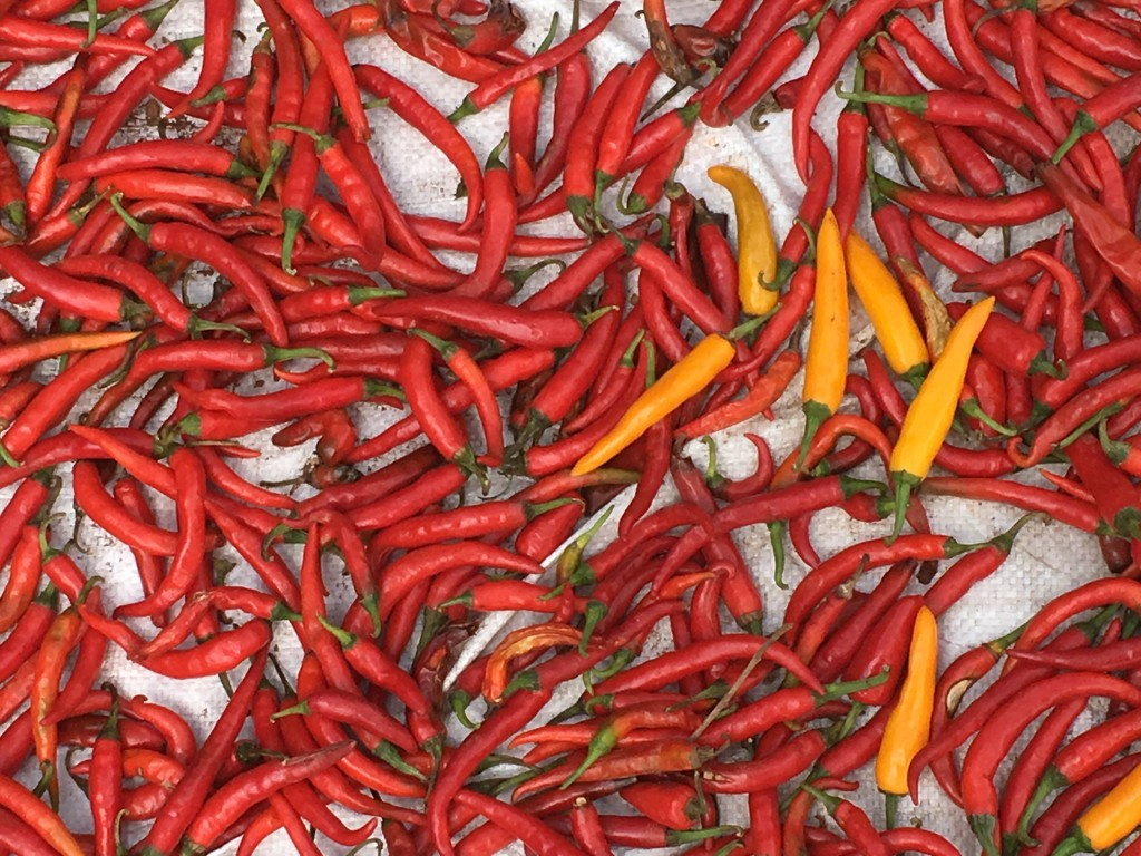 Red chillies sun-dried