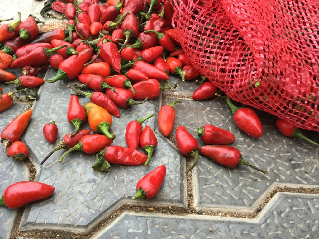 Ripe red chillies